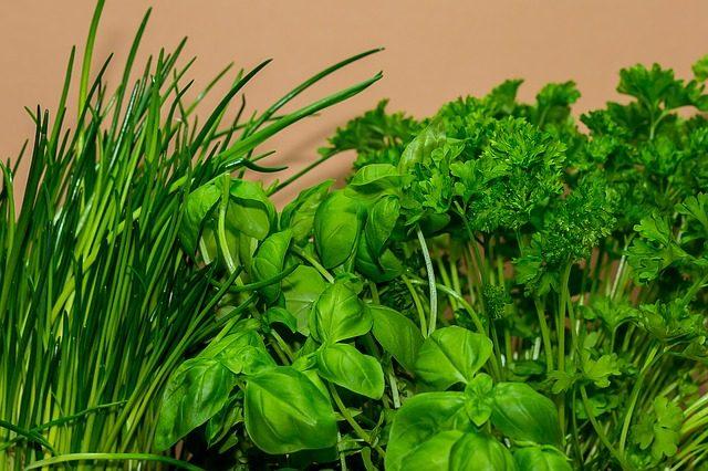 Устройства для выращивания зелени дома  - идеи подарка повару