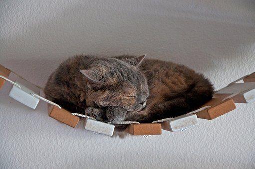 Подвестной мост - подарки кошке