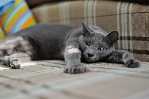 Когтерезка - подарки кошке