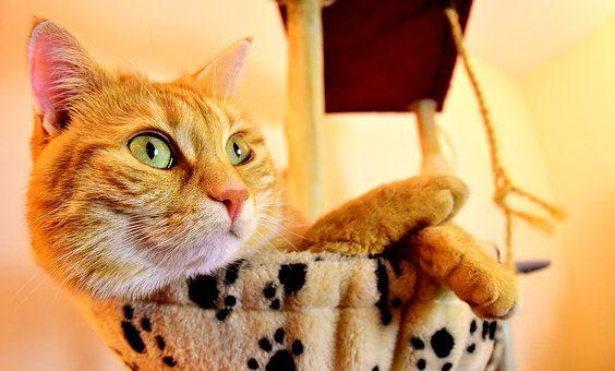 Домик с игровой площадкой - подарки кошке