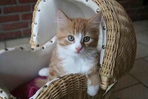 Лежанка - подарки кошке