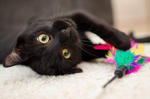Игрушка - подарки кошке