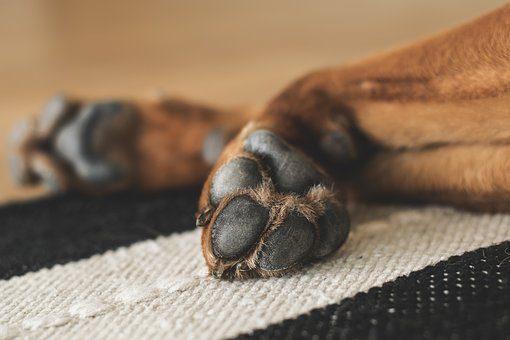 Лапомойка - подарок собаке