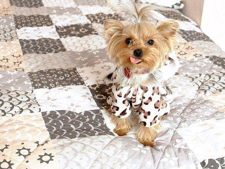 Одежда - подарок собаке