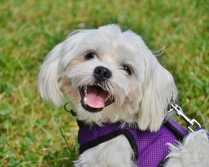 Ультразвуковой  отпугиватель клещей - подарок собаке