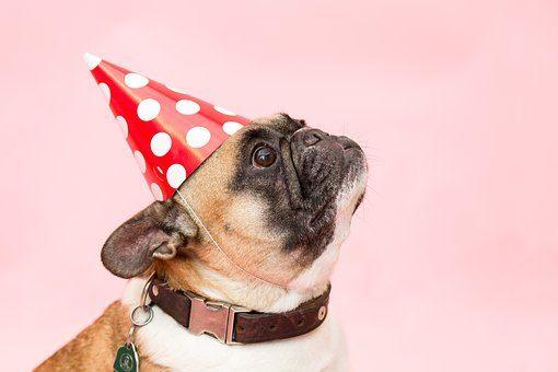 7 подарков собаке-Подариок
