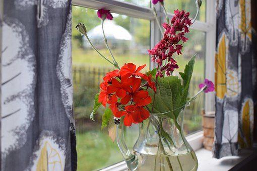 Цветы - 12 подарков для домашнего уюта