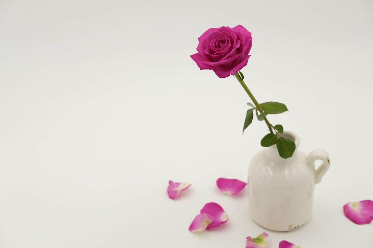 Цветок - что подарить на первом свидании девушк