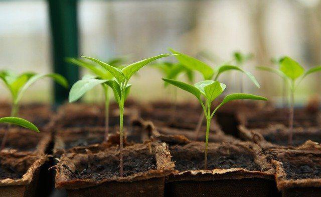 Проращиватель семян  - Что подарить домохозяйке