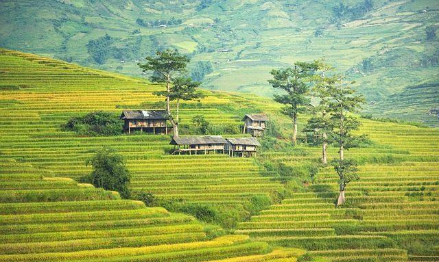Вьетнам и Таиланд -  Съедобные сувениры из разных стран мира