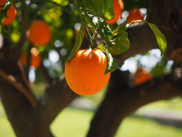 Апельсин- какое эфирное масло подарить