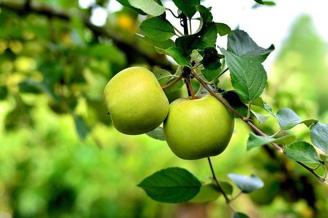 Зеленое яблоко- какое эфирное масло подарить