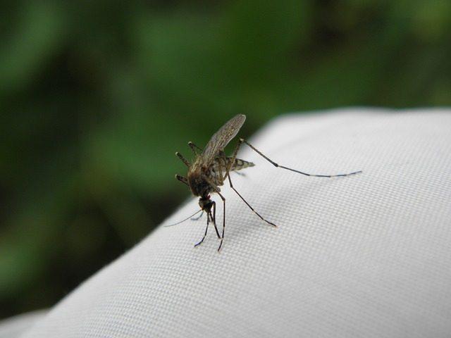 Отпугиватель комаров - что подарить дачнику