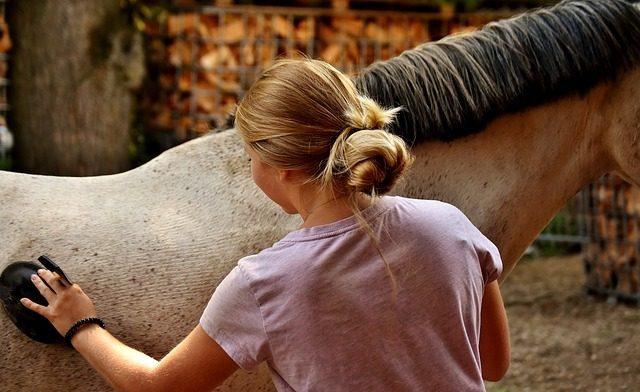 Набор для ухода за лошадью - подарок любителю лошадей