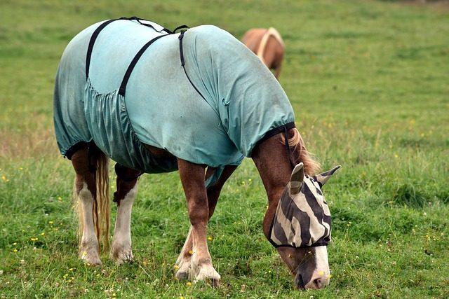 Попона - подарок любителю лошадей