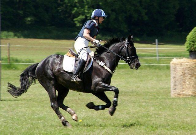 Что подарить любителю лошадей-Подариок