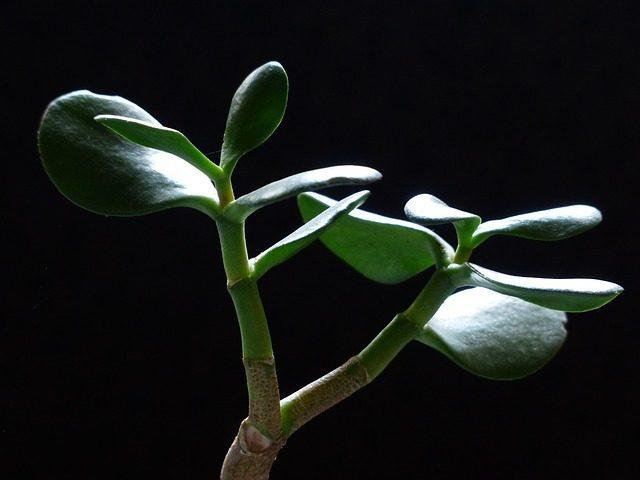 Денежное дерево - Что подарить инвестору