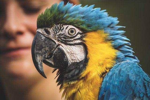 Попугай - идея подарка Подариок
