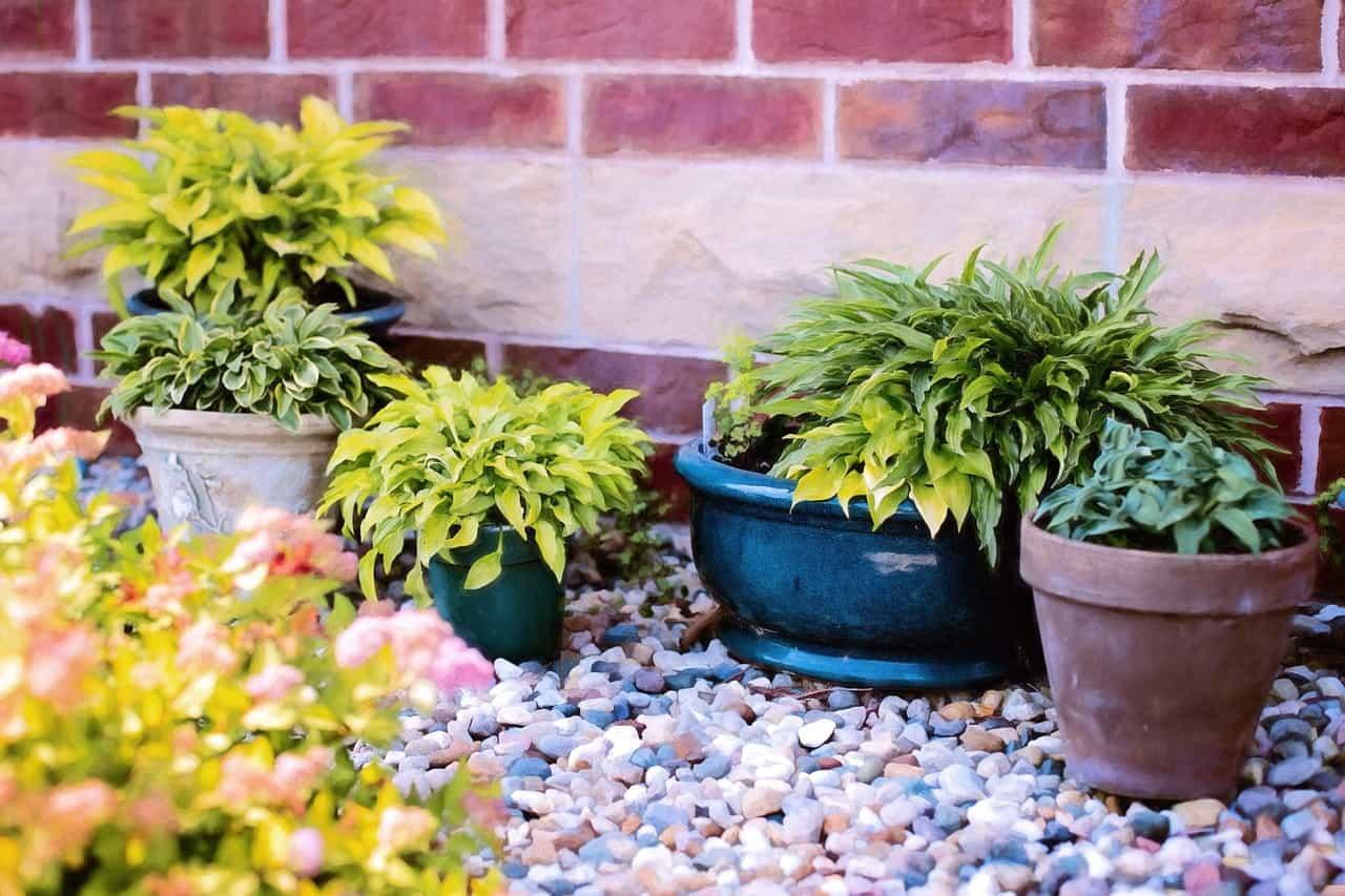 'plant'
